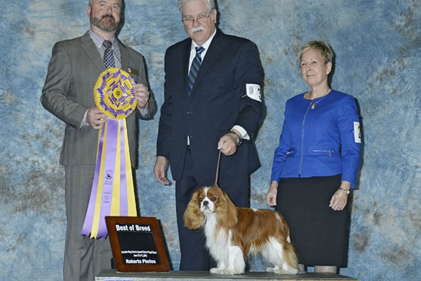 Best of Breed-Judi Steagall