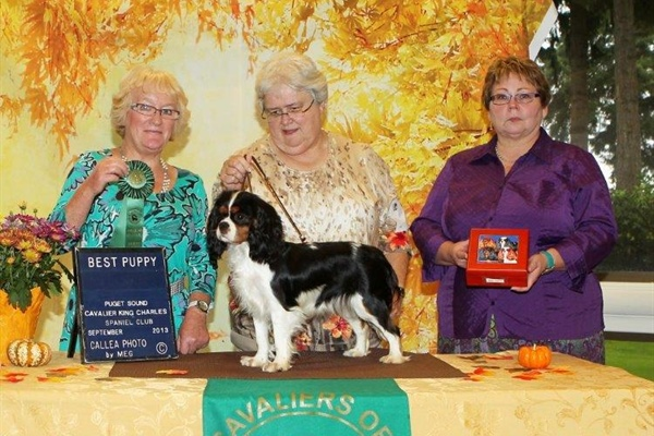 Best Puppy, Balgaire Wonderfully Wicked, Owners, Ruth Lerda, Janice Stanton