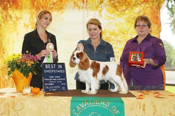 Best in Puppy Sweeps, Covington Elijah Craig, Owners Heidi E. Mohn, Gregory Mohn