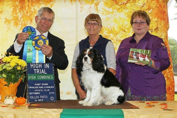 Obedience High Scoring From Classes & High Combined Score from OpenUtility, Moyola Lad Of The Lake CDX, Owners  Maureen Murray, Gavin Murray