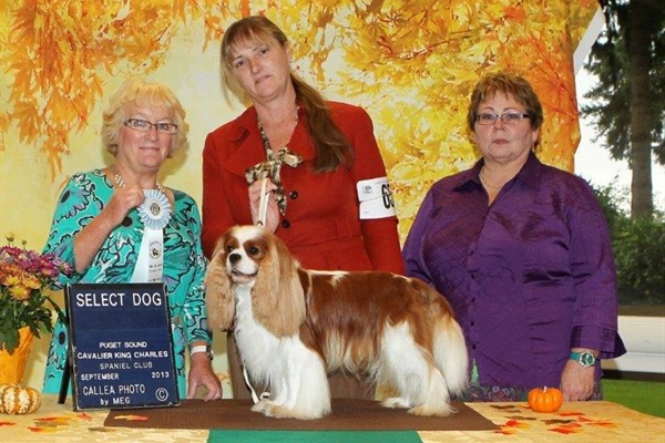 Select Dog, GCH Full of Malarkey Miles Of Aisles, Tamara Kelly, Patrick Kelly