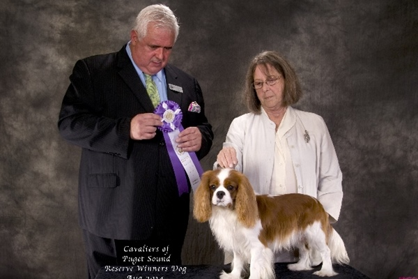 Reserve Winner's Dog-Kanan_Burbon