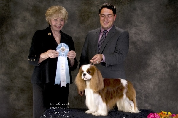 Judges Select Dog New Grand Champion-Kanan-Iggy