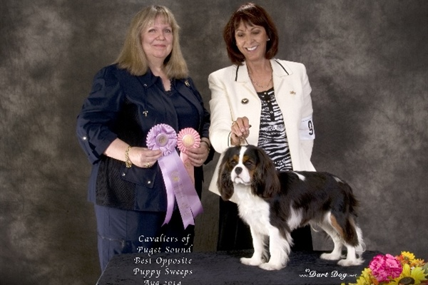 Best Opposite Puppy Sweeps-Johnson-Marshall