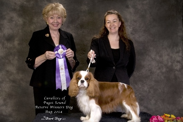 Reserve Winners Dog-McHenry-Adam