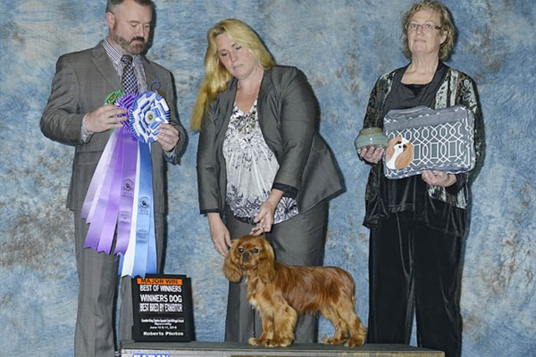 Best of Winners - Winner's Dog - Best Bred by Exhibitor-Dawn Stevens Lindemaier
