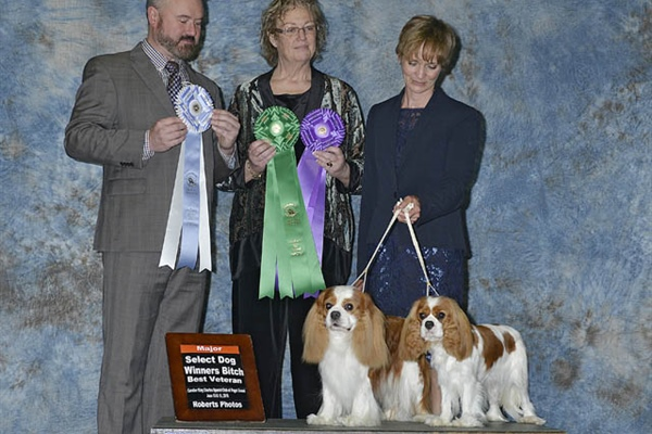 Select Dog & Best Veteran - Winner's Bitch - Rebecca Smith